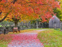 Fall Foliage with Bench and Shed